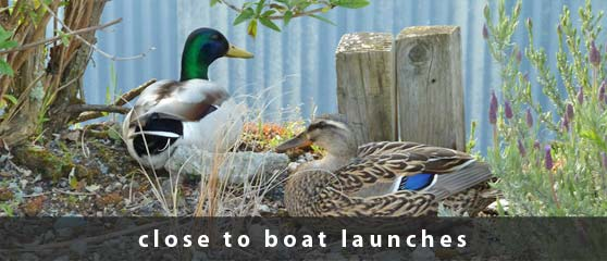 Ducks in front of office | near boat launches